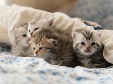 Huisdieren - kleine katjes in deken