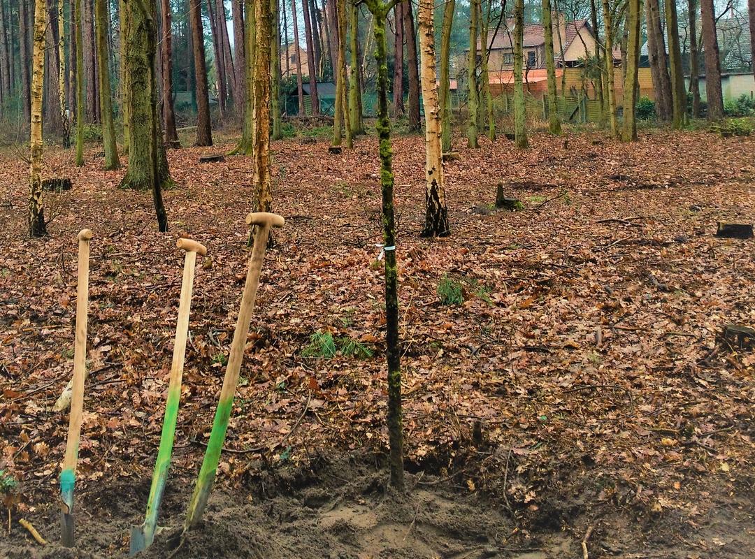 Natuurbegraafplaats en herdenkingsboom in Zoersel, geplant op 22 maart 2018